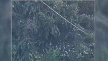 Viento helado en Florida provocó la caída de ligeros chubascos de nieve sobre Palm Beach