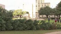 Inicia el programa de reciclaje de árboles de navidad en Houston