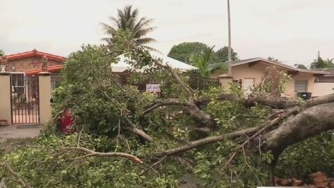 Árbol cae sobre un auto como consecuencia de las fuertes lluvias y ráfagas de viento en Miami-Dade