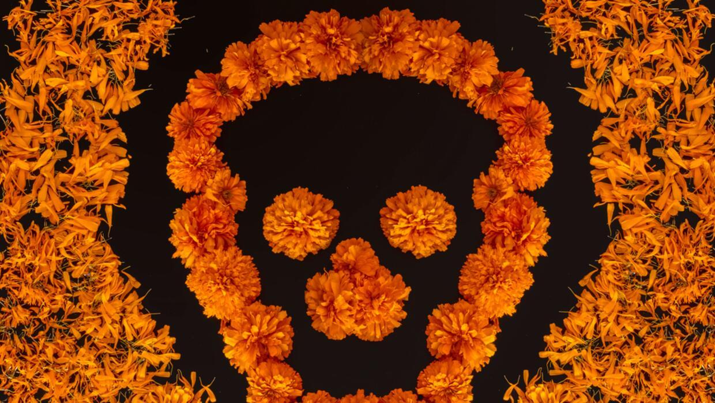 Cempasúchil, las cualidades curativas de la flor de muertos | Horóscopos |  Univision
