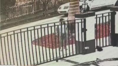 Buscan a una mujer acusada de robar un perro yorky que le pertenece a una niña de 8 años