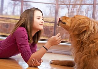 Bocadillos caseros para tu perro