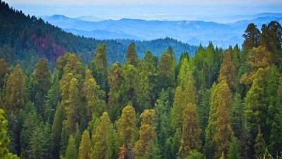 Las personas que viven en los Estados Unidos están cada vez más lejos de sus bosques