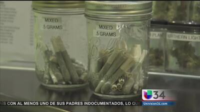California busca legalizar la marihuana recreacional