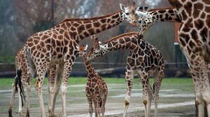 Estudio considera el parque de Natomas como la mejor opción para el nuevo zoológico de Sacramento