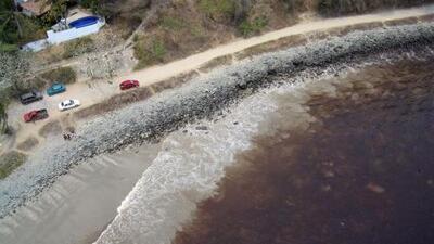 Qué es y dónde se encuentra la tóxica marea roja que está afectando las costas de Florida