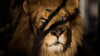 """""""Solo dejaron la calavera y unos pantalones"""": un elefante mata a un cazador furtivo y los leones devoran su cuerpo"""