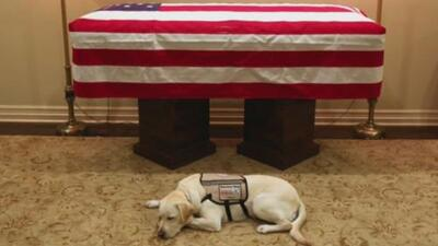 Sully, George H.W. Bush's service dog is helping wounded soldiers