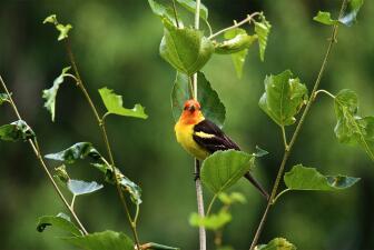 Siete parques nacionales y sus aves que serán fuertemente afectados por el cambio climático