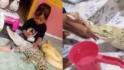 (Video) Niña juega con un cocodrilo y hasta le cepilla los dientes
