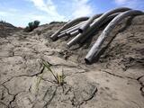 No hay agua ni trabajo: vecinos de un pueblo de California abandonan sus casas debido a la creciente sequía