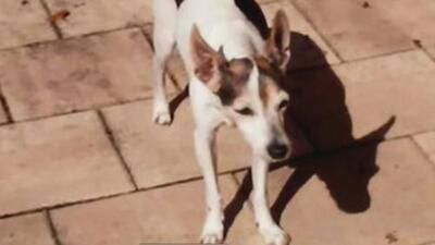 La mascota de una anciana muere luego de ser atacada por dos perros pitbull