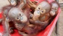 Se acelera la destrucción: Un millón de especies en peligro de extinción por causas humanas