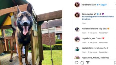 Hugo Lloris paga 17,000 euros por un perro para proteger su casa