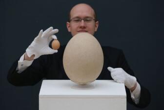 Subastan un huevo gigante de 'ave elefante'