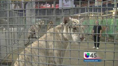 Ringling Bros. asegura no maltrar animales