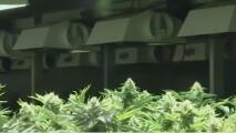 La marihuana ahora es legal en Nueva Jersey, pero la logística debe resolverse