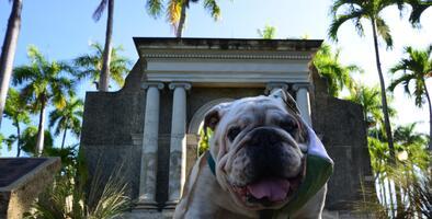 "Fallece ""Tarzán"", la mascota del Recinto Universitario de Mayagüez"