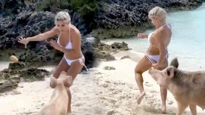 """""""¡Me mordió la nalga!"""": Michelle Lewin entra en pánico cuando un cerdo la embistió por la retaguardia en bikini"""