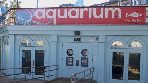 Acuario de Santa Mónica, un lugar donde se promueve el cuidado y la conservación de los océanos