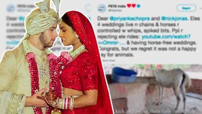 Acusan a Priyanka Chopra y Nick Jonas de crueldad animal durante su boda