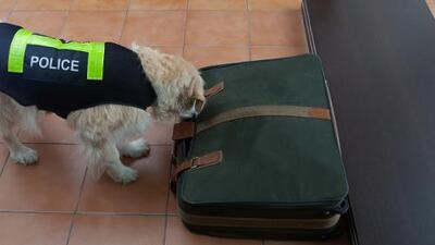 Policía en Nueva Jersey deja de entrenar a perros para olfatear la marihuana