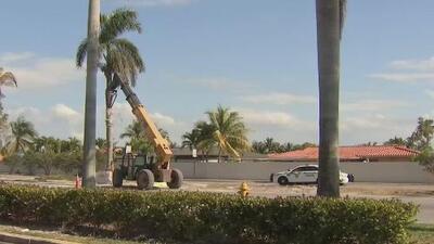 Un hombre muere luego de que le cayera encima una palma mientras trabajaba en Miami-Dade