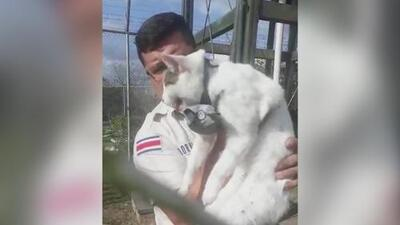 Este gato era una de las armas secretas de los narcotraficantes en Costa Rica