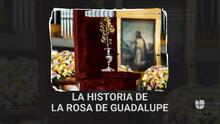 ¿Conoces cuál es el origen de la Rosa de Guadalupe?