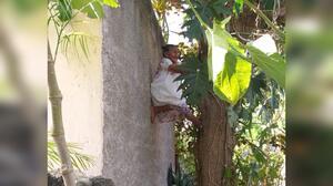 """""""Me siento fuerte"""": Doña Mechita, una abuela mexicana que a sus 88 años trepa árboles para bajar sus frutos y venderlos"""
