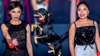 Así fue la alfombra roja de los Premios Ariel en México (fue hasta El Borras, el perrito de 'Roma')