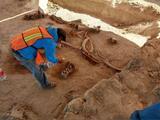 Encuentran más de 70 esqueletos de mamut en el emplazamiento del nuevo aeropuerto de la CDMX