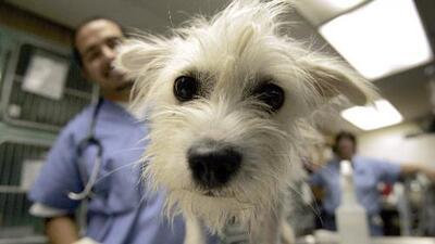 ¡Adóptalos por solo 1 dólar! El albergue de animales de Houston busca un nuevo hogar para perros y gatos
