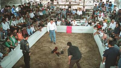 Un ataque en un club de peleas de gallos deja seis muertos en México