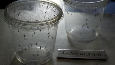 Embarazadas con Zika podrían tener bebés con problemas de salud