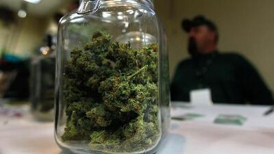Las dificultades de entrar a la industria de producción legal de una droga que estuvo prohibida