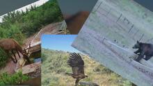 Falta de lluvia y temperaturas intensas afectan a las especies nativas de Arizona