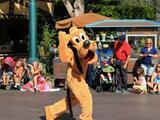 Video: perro de servicio se encuentra con Pluto