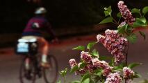 Remedios caseros para combatir algunas alergias que llegan con la primavera