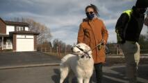 Una perra salva la vida de su dueña tras caer al suelo con convulsiones y todo queda grabado en video