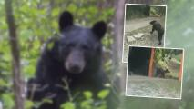 """""""Estaba en los huesos"""": Video de oso desnutrido en Nuevo León causa compasión"""