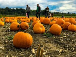 Donde ir para encontrar tu calabaza de Halloween: esta es una lista de granjas de calabazas en Chicago y sus alrededores