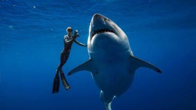 Un inmenso (y dócil) tiburón blanco sorprendió a varios buzos en aguas de Hawaii