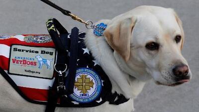 Sully, el perro de servicio de George H. W. Bush, lo acompaña hasta el último momento