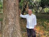 México pedirá a Joe Biden que otorgue visas a centroamericanos que se sumen a programa para sembrar árboles