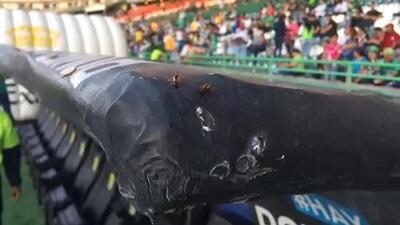 Insectos invaden la banca de Veracruz en León
