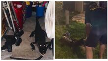"""""""Mantén cerrada la puerta de tu garaje"""": advierte mujer de Florida que encontró un cocodrilo en su casa"""