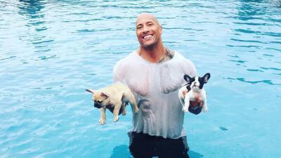 Viral: Dwayne 'The Rock' Johnson rescató a dos cachorros