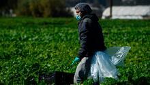 Trabajadores agrícolas de Kern ven dificultades para acceder a vacuna del coronavirus