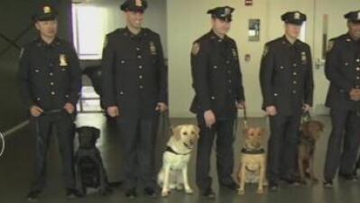 VIDEO: Estos perros librarán a NYC de ataques como el de Bruselas